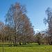 20150406 7557VRAw [D~SHG] Birken, Baggersee,  Rinteln