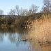 20150406 7559VRAw [D~SHG] Schilf, Baggersee,  Rinteln