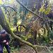 Umgestürzte Eiche auf meinem Grundstück