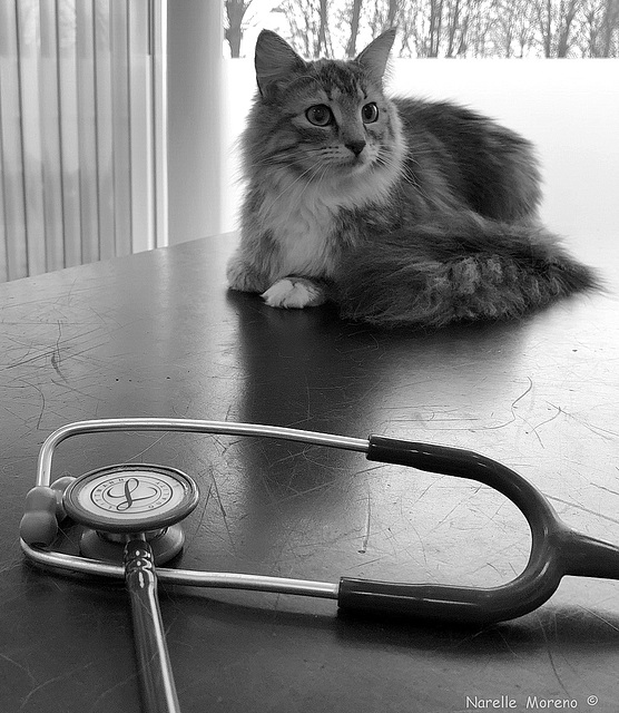 Yikes, I Think The Vet Is Coming Back!!