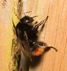 BumblebeeEF7A2147