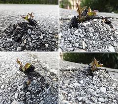 Die unbändige Kraft der Natur. The overwhelming power of nature. ©UdoSm