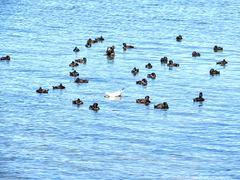 At Lake Rotorua