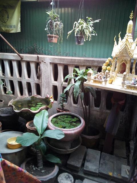 Plantes de culte