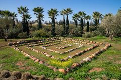 Anima Garden - 1