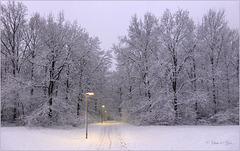 Illuminated Snow Path...