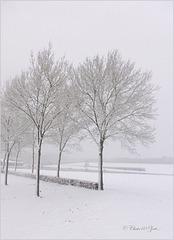 White Misty World...