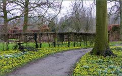 Een hele tuin vol Winterakonietjes. Zo mooi.....
