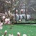 Gandhi and the magnolias