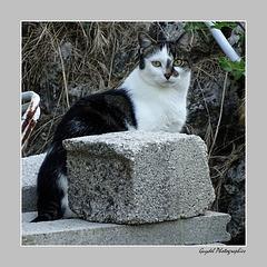 Le chat maçon ...