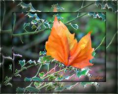 """""""A l'automne des saisons, ce sont les feuilles qui meurent. A l'automne de la vie, ce sont nos souvenirs."""""""