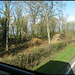 logging near Buckland