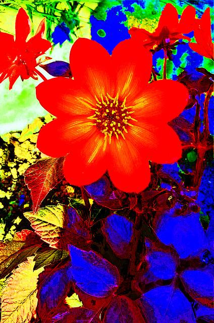 spot sur la fleur