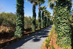 Anima Garden - 2
