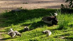 parc des oiseaux - Villars les Dombes