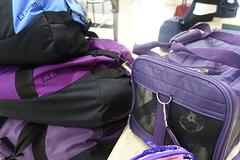 Abigail in her bag