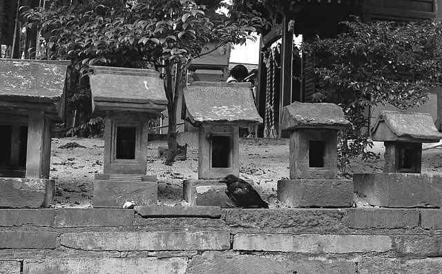 Stone shrines and a crow