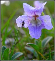 Strange flower
