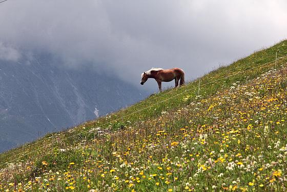Pferdeglück (PIP)