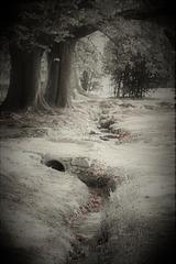 Le petit cours d'eau.....