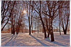 """""""Es geht ein Licht vom Himmel wie Rosenmilch. Geht durch die leeren Bäume über den Schnee...""""  ☼   """"There's a light from heaven like rose milk. Goes through the empty trees over the snow..."""""""