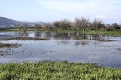 Lake Hula – Hula Valley Nature Reserve, Upper Galilee, Israel