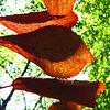 Copper beech leaves 2