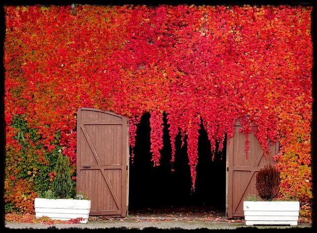 Quand l'automne rougit de plaisir.. [ON EXPLORE] (clic sur photo)