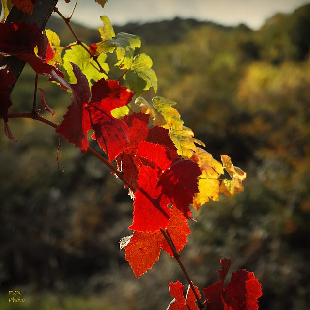 Ambiance d' automne...
