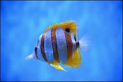 detail - Aquarium