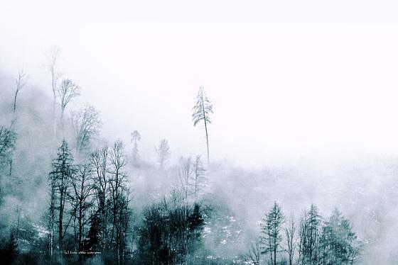 ... solotudine nella nebbia ...