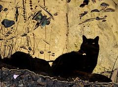Katze in Öl ;)