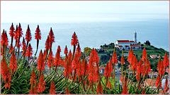 Madeira : Igreia de Sao Martinho