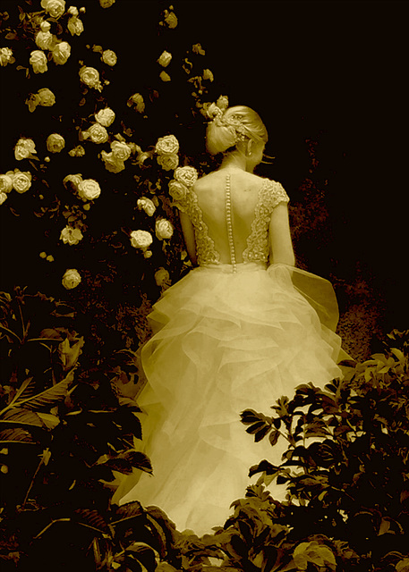 arrayed for the bridal