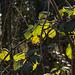 20150406 7579VRAw [D~SHG] Blätter, Baggersee,  Rinteln