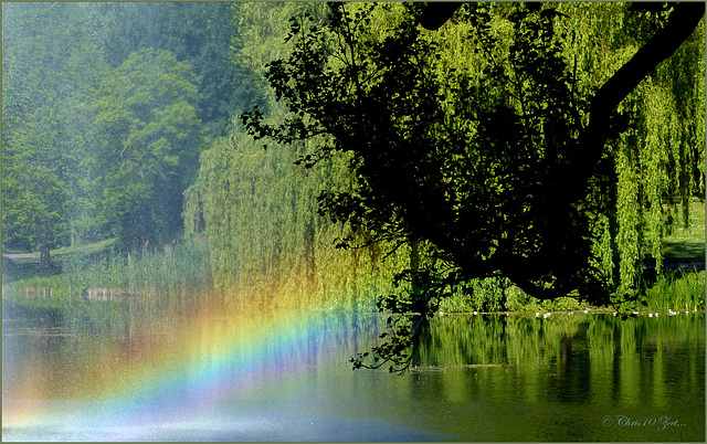 #29 Rainbow over the Lake...