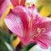 Floral (4)