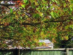 Under Autumn Branches.