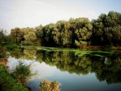Tamiš River