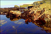 Rock pool, clear water, Basset Cove.