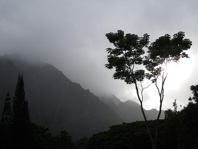 IMG 0913 (2) Hawaiian mountain