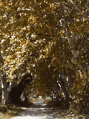 watercolours - acquarellando l'autunno