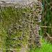 Fungi on tree stump (2)