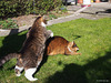 Spring leapfrog? - for Happy Caturday