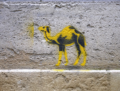 n'est pas chameau qui veut
