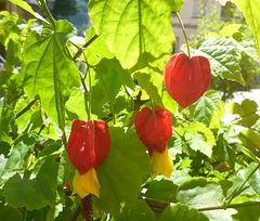 Blätter und Blüten im Sonnenlicht - folioj kaj floroj en sunlumo