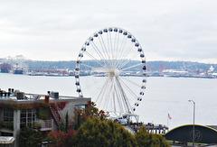 Seattle Eye