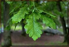 summer leaves / ramille en famille