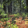 Early autumn colours in Rough Standhills 4