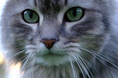 le chat qui a pris le vert de trop